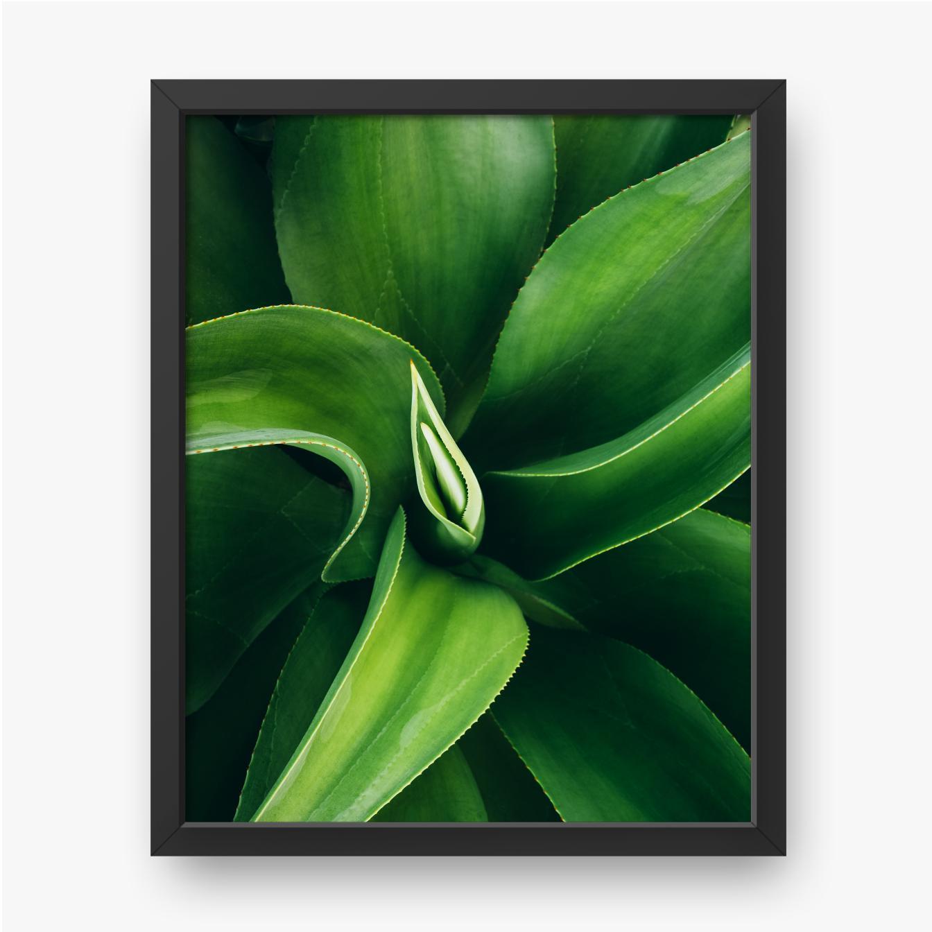Roślina o zielonych liściach
