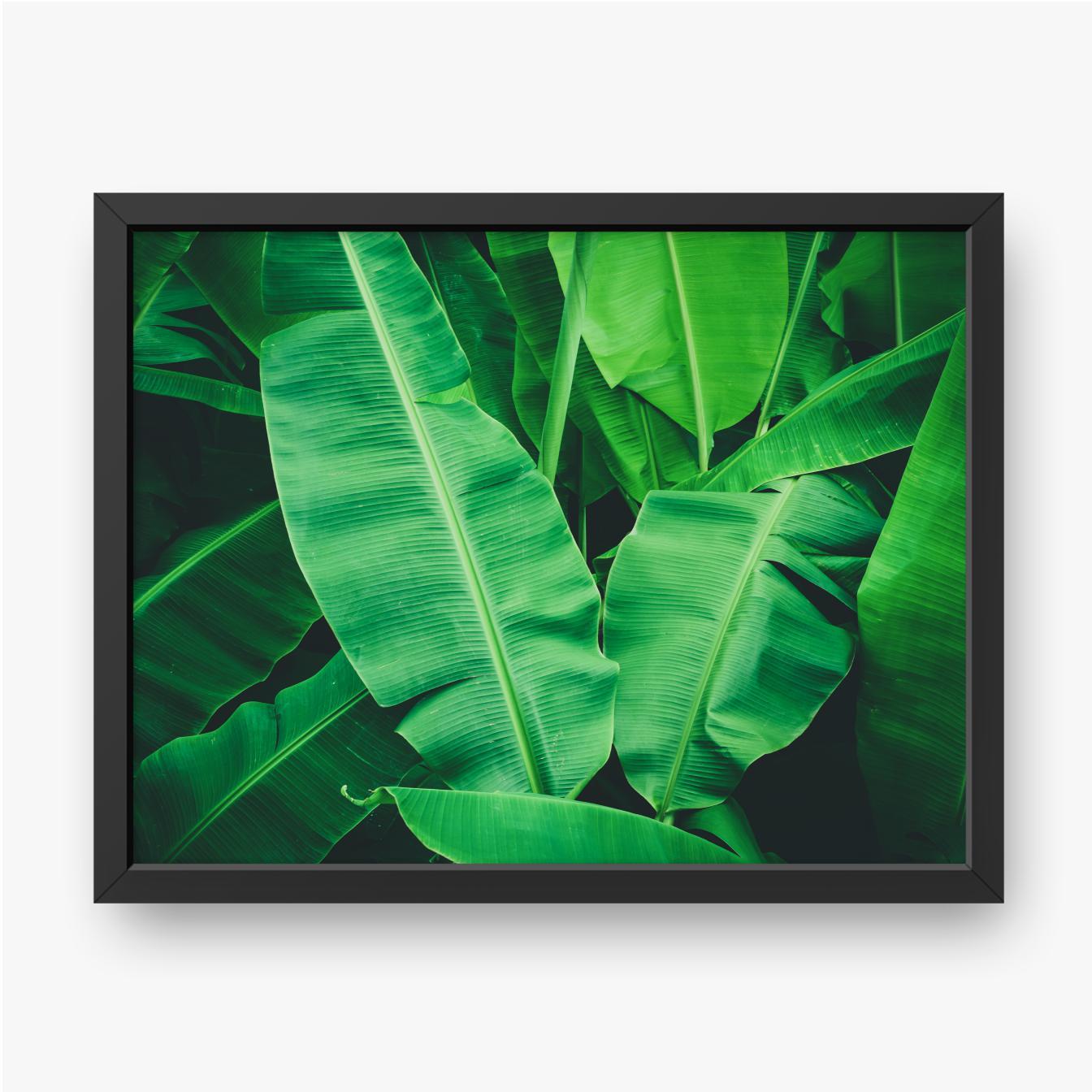 Tropische Bananenblätter