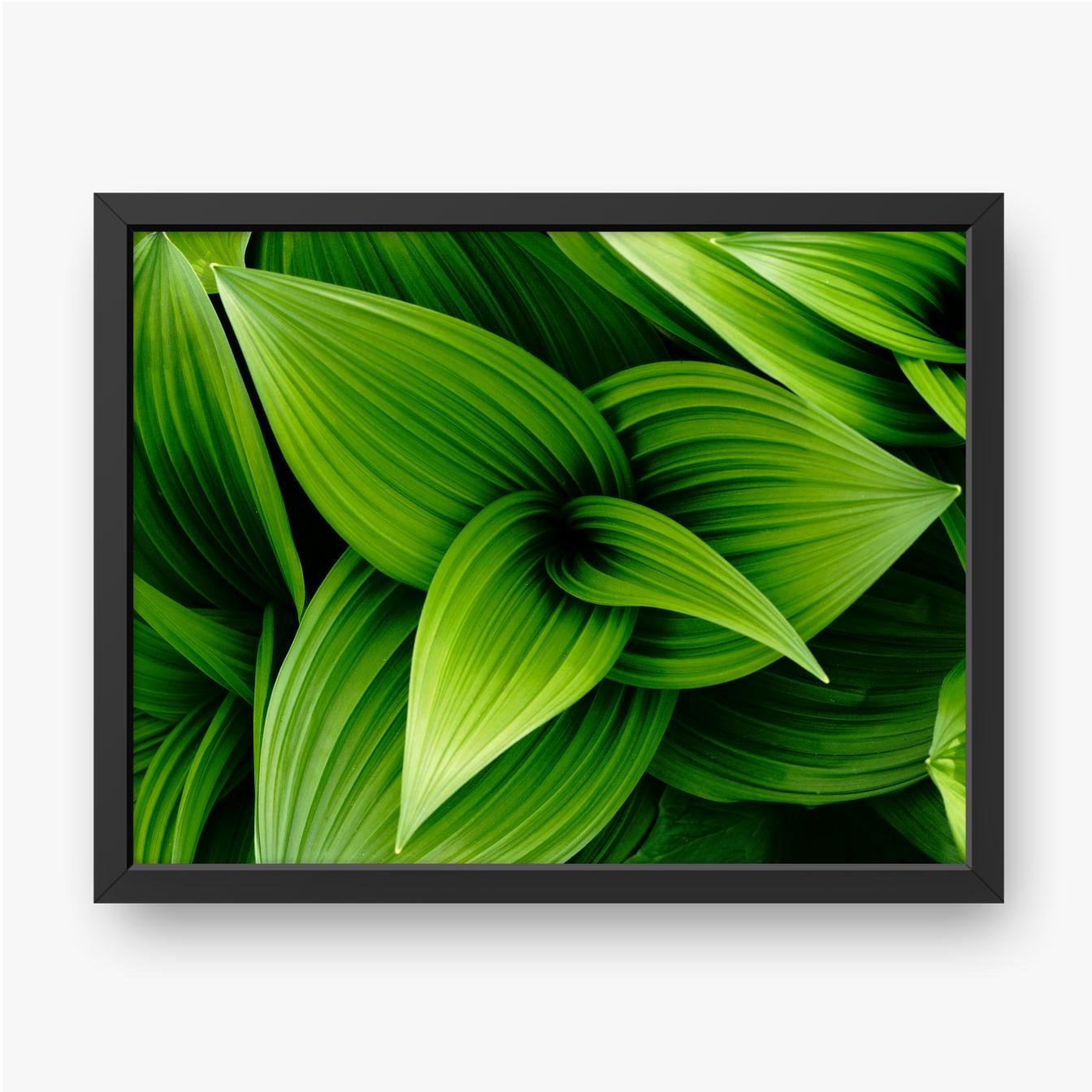 Grüne Pflanze von oben gesehen