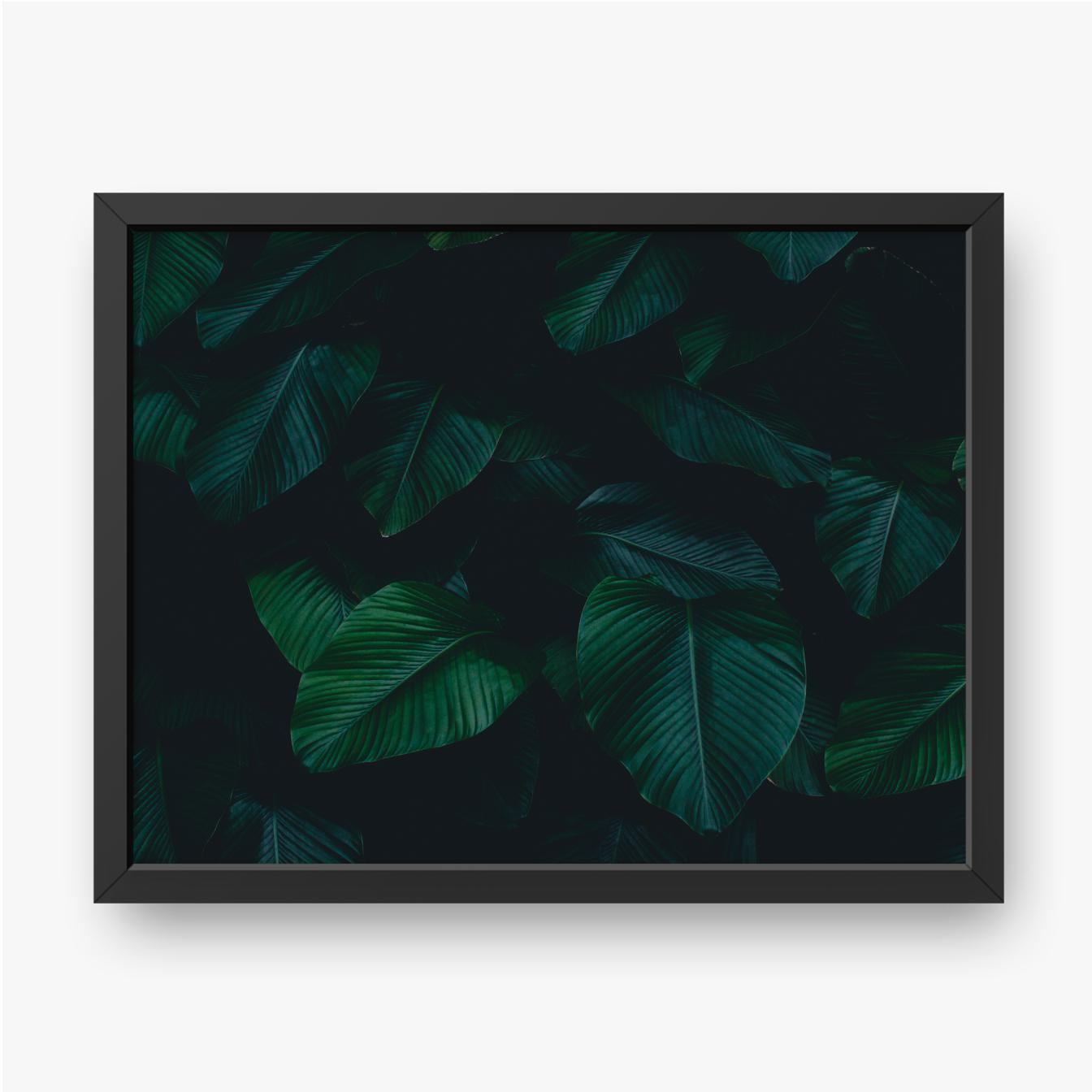 Tropische Blätter im Dunkeln
