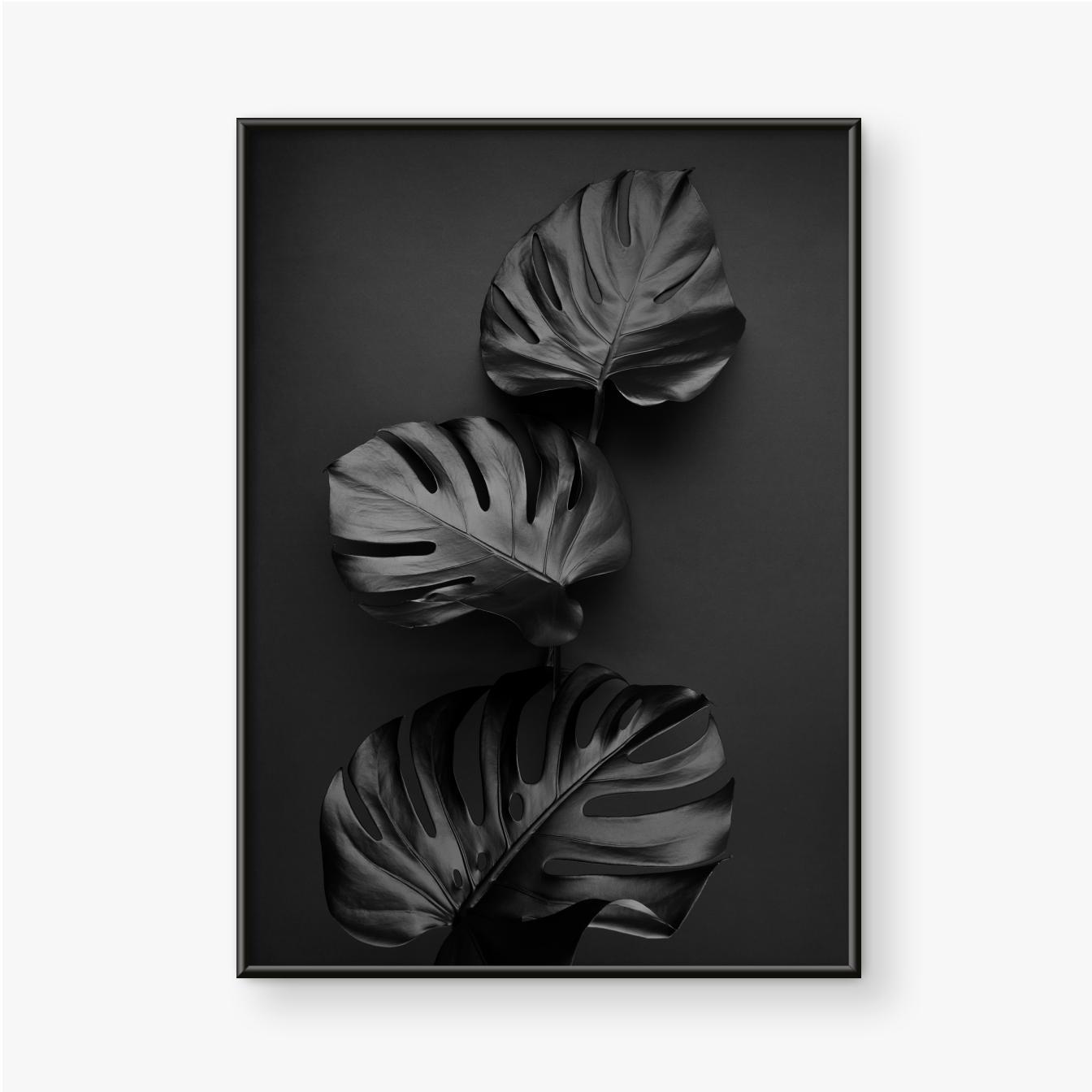Plakat w ramie Trzy liście monstery pomalowane na czarno na ciemnym tle