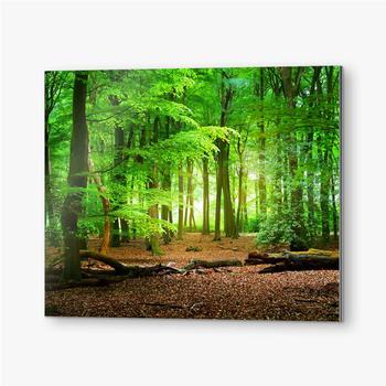 Gehweg in einem Frühlingswald in den Niederlanden