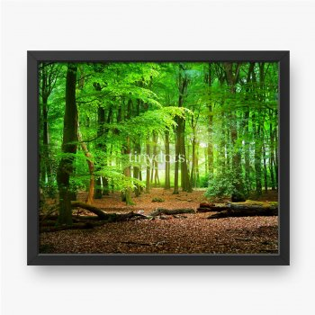 Chodnik w wiosennym lesie w Holandii