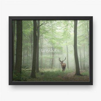 Schönes Bild des Rotwildhirsches im nebligen herbstlichen bunten Wald