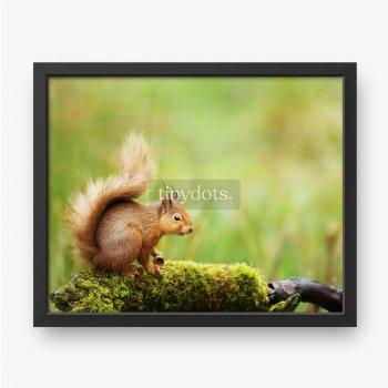 Rotes Eichhörnchen sitzt auf einem moosigen Baumstamm