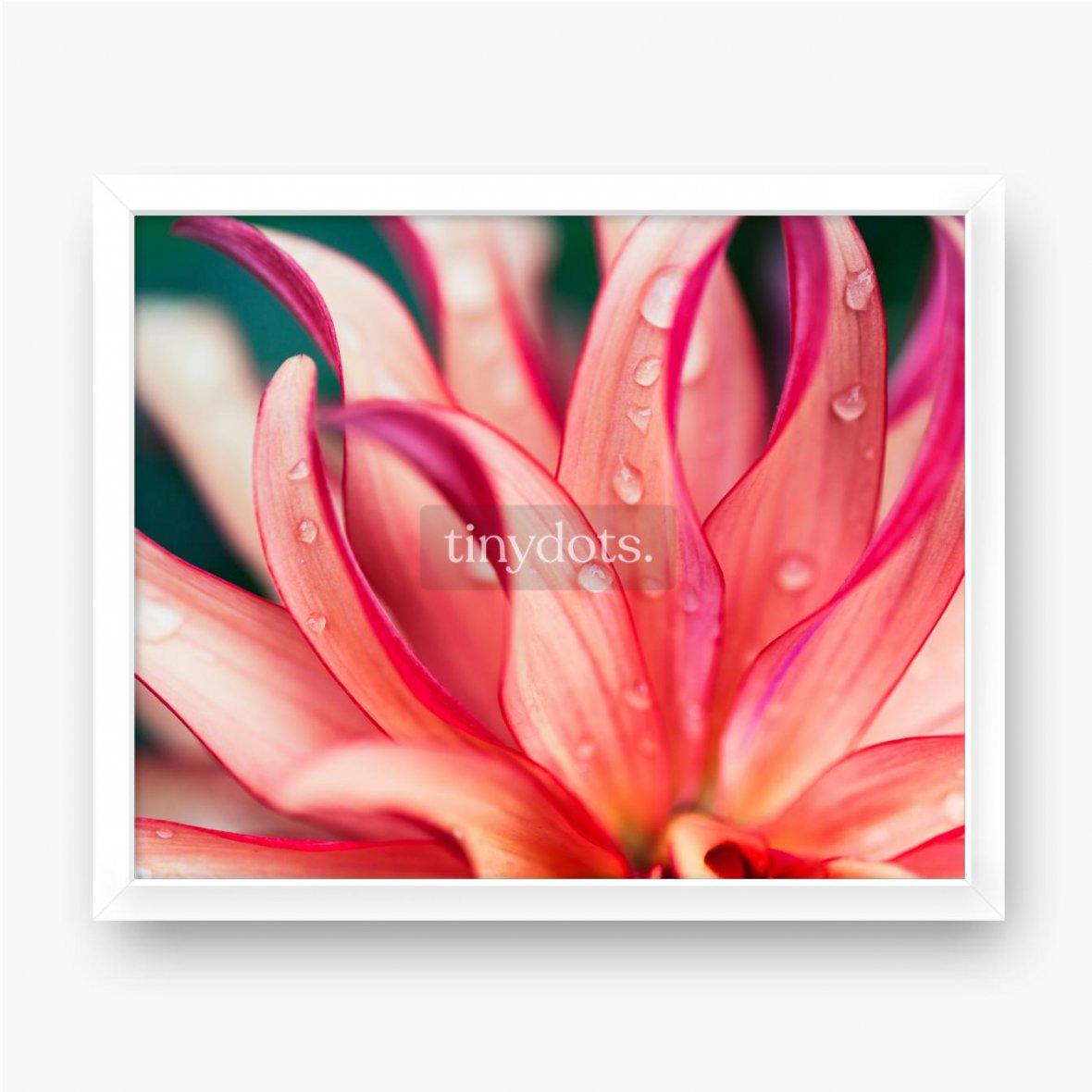 Gerahmtes Poster Rosa Blumenmakro