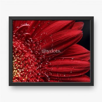 Schöner natürlicher Hintergrund. Sommer, Frühlingskonzepte, Zusammenfassung eines roten Gerber-Gänseblümchenmakros mit Wassertro