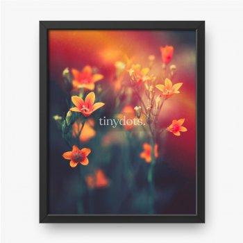 Schöne Glockenblumen in der Natur im abendlichen Sonnenuntergang-Nahaufnahme-Makro in den dunklen Tönen Orange und Rot