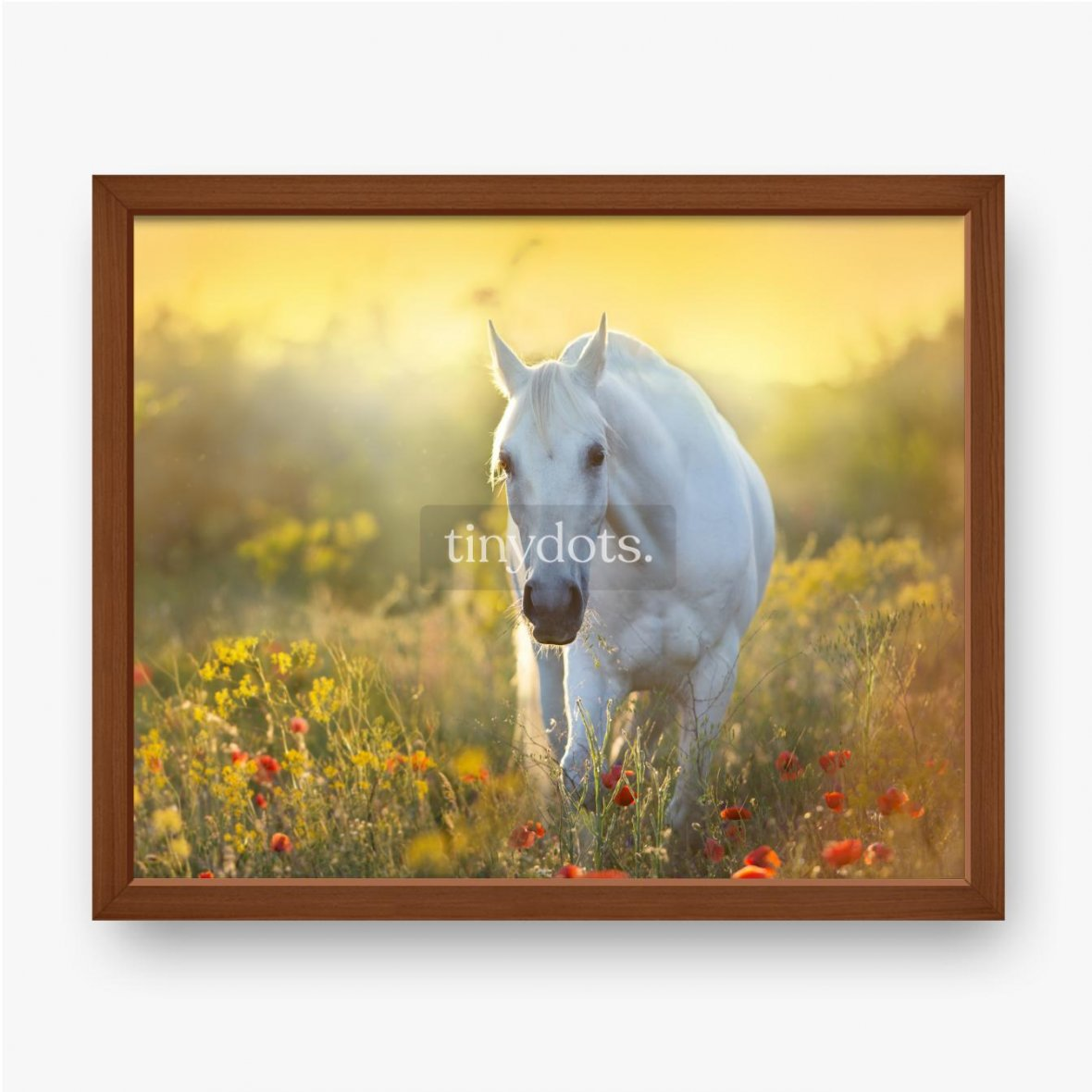 Gerahmtes Poster Weißes Pferdeporträt in Mohnblumen bei Sonnenaufganglicht
